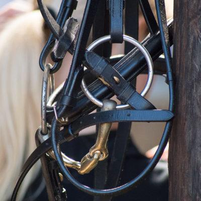 Pferde-Sport