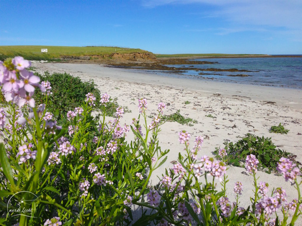 Orkney-Stronsay1